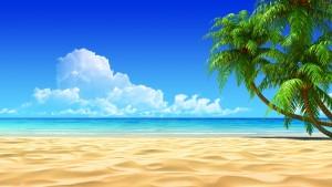 Sfondi HD spiagga e palme