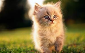 Sfondo HD gattino dolcissimo
