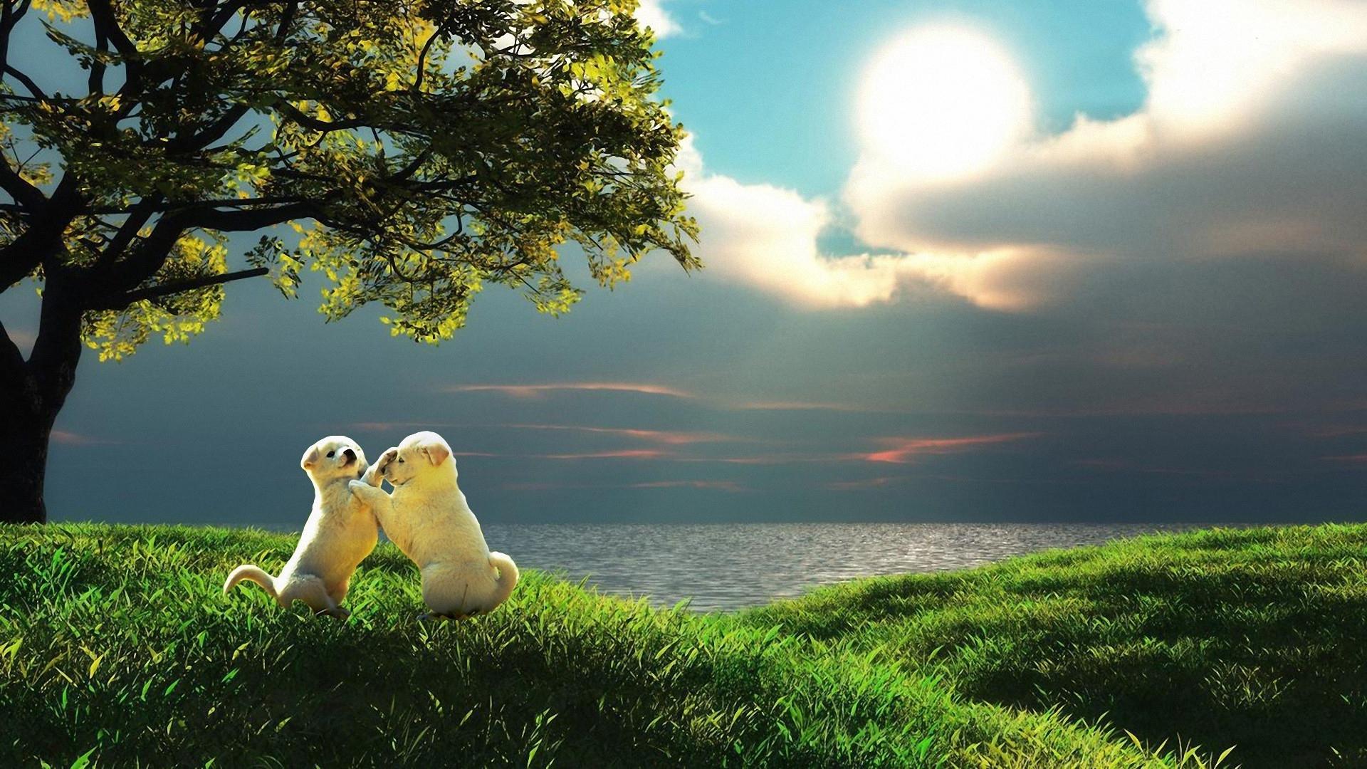 Sfondi hd cagnolini nei prati bellissimi sfondi hd gratis for Sfondi paesaggi bellissimi