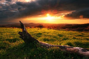 Sfondi HD natura prateria al tramonto