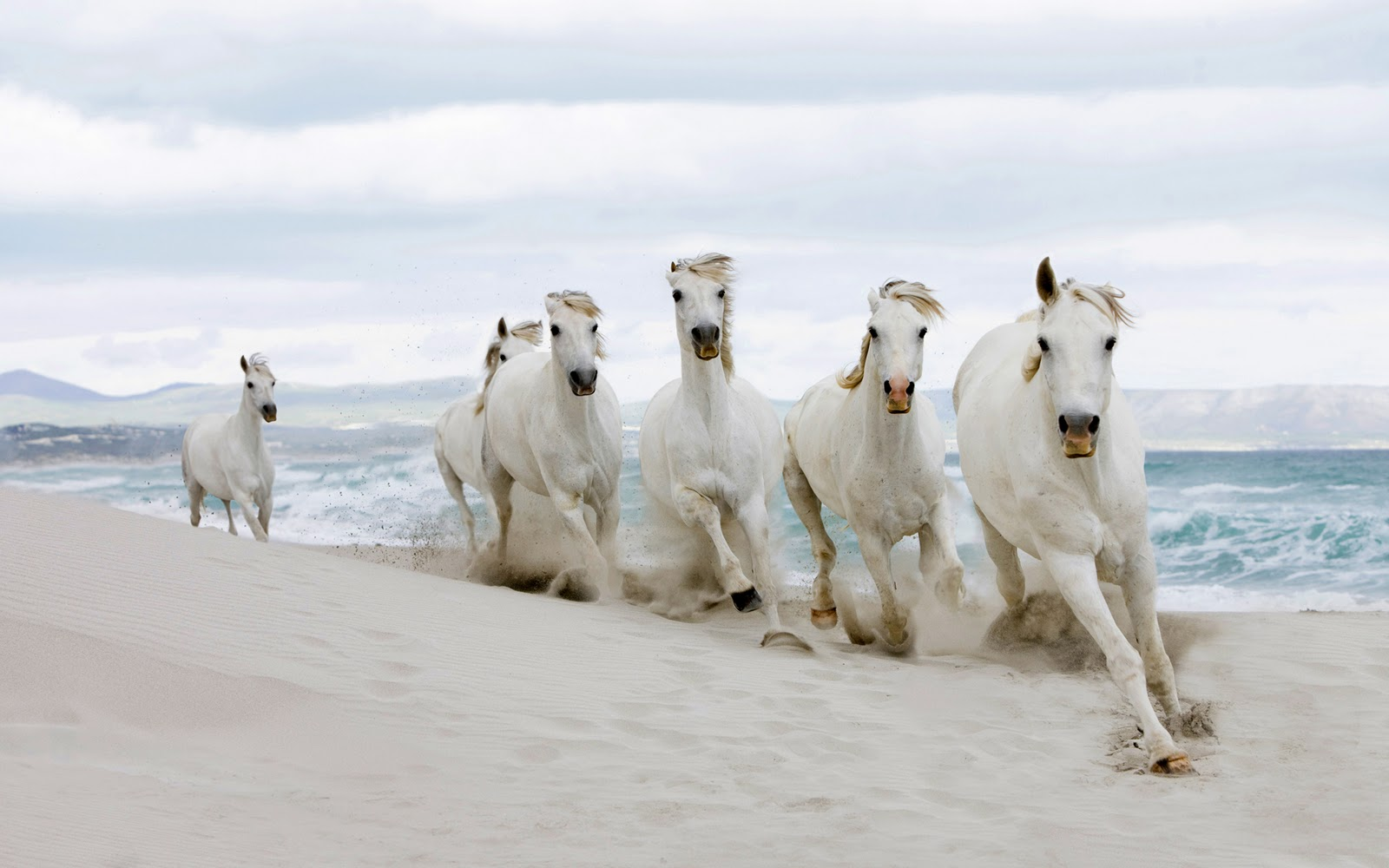 Sfondi desktop hd cavalli bianchi sfondi hd gratis for Sfondi cavalli gratis