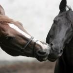 Sfondi desktop HD cavalli dolcissimi
