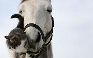 Sfondi desktop HD cavallo e gattino dolcissimi