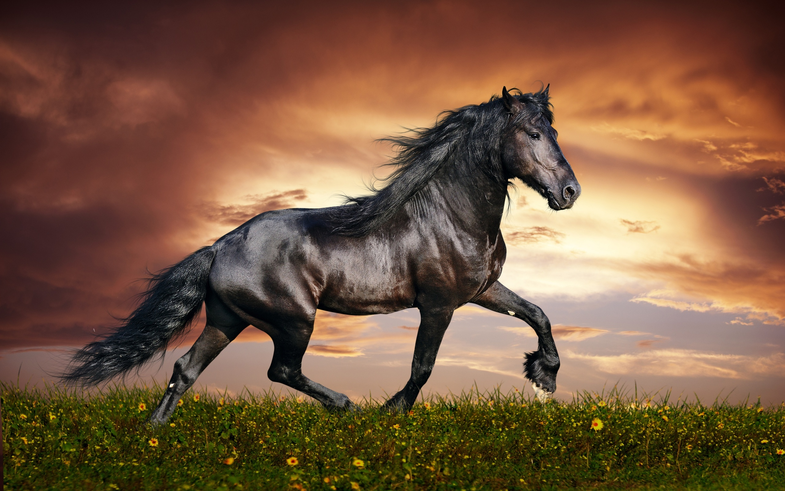Sfondi desktop hd cavallo nero sfondi hd gratis for Sfondi desktop hd gratis