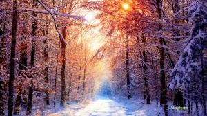 Sfondi HD paesaggio inverno neve