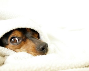 Sfondo HD cane al calduccio