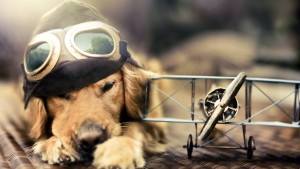 Sfondo HD cane aviatore