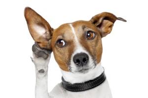 Sfondo HD cane divertente che origlia
