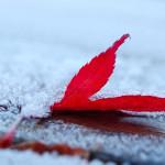 Sfondo HD neve e foglia