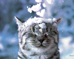 Sfondo HD neve e gattino