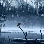 Sfondo HD neve e lupo