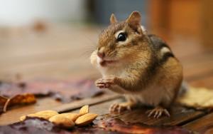 Sfondo HD scoiattolo