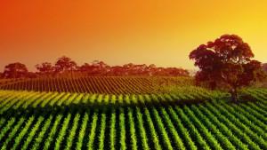 Sfondo natura campi coltivati
