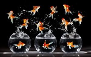 Sfondo pesciolini simpatici