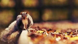 Sfondo scoiattolo wallpaper