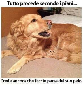 Immagine simpatica cane e gatto