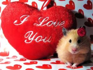 Sfondi HD San Valentino cuore I love you