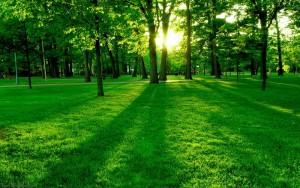 Sfondo Hd paesaggio naturale parco verde