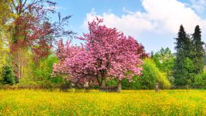Sfondo Hd paesaggio naturale primavera