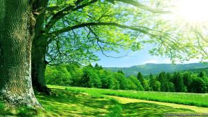 Sfondo Hd paesaggio naturale relax