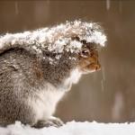 Sfondo inverno scoiattolo tra la neve
