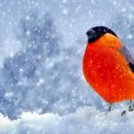 Sfondo uccellino tra la neve wallpaper