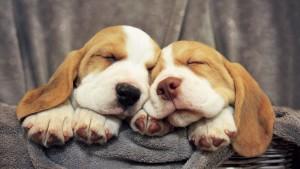 Sfondo cuccioli che dormono