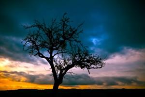 Sfondo albero e tramonto
