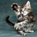 Sfondo desktop gattino che gioca