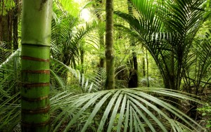 Sfondo desktop giungla di bambu
