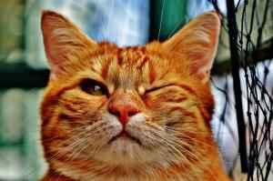 Sfondo gatto che fa occhiolino