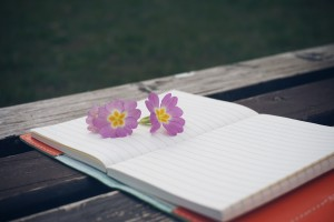 Sfondo quaderno e fiore su panchina